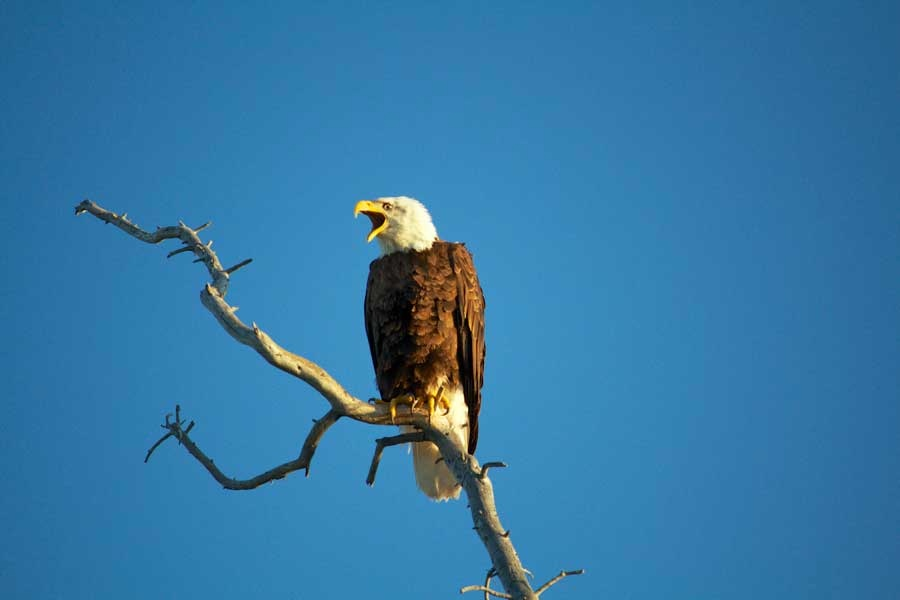 Eagle Viewing at Namushka Lodge